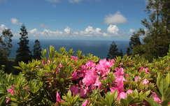 azori-szigetek tenger portugália rododendron tavasz
