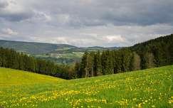 ausztria alpok virágmező vadvirág