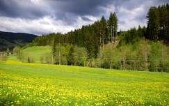 virágmező tavasz vadvirág