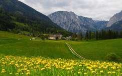 út vadvirág ausztria alpok hegy