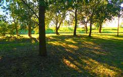Fák alatt.
