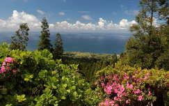 azori-szigetek portugália rododendron