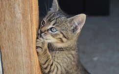 Cica, tavasz, állat