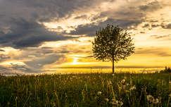 fa vadvirág felhő naplemente