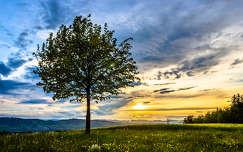 fa felhő naplemente