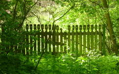 kerítés tavasz