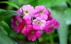 vízcsepp nyári virág