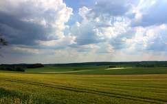nyári mező
