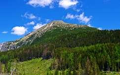 erdő hegy