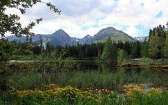 nyár vadvirág hegy tó