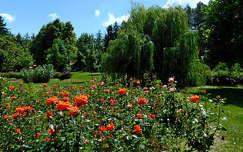 rózsakert, Zalakaros, magyarország