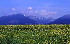 nyár vadvirág hegy virágmező