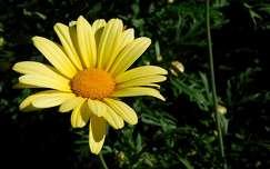 virág, nyár, magyarország