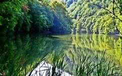 erdő nyár tükröződés tó alpok