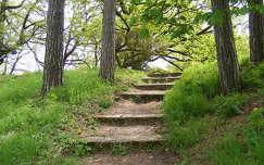 út lépcső fa