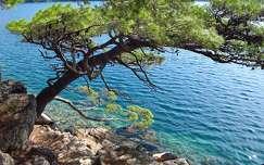 tenger fa