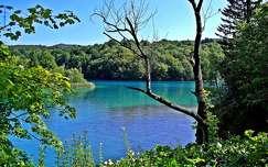 erdő tó