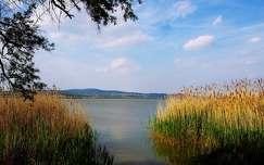magyarország balaton nád tó