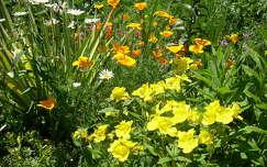 nyári virág,kert