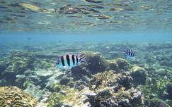 Vörös-tenger, Egyiptom