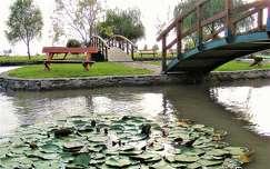 híd pad tavirózsa kertek és parkok