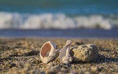 Kagyló, nyár, hangulat, tengerpart, homok, tenger
