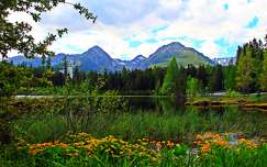 vadvirág hegy nyár