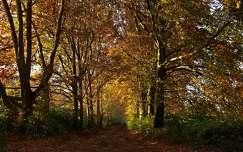 út ősz fasor