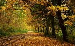 út fasor ősz