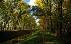 fasor csatorna ősz