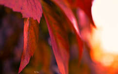 ősz levél