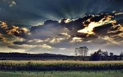 ősz kukoricaföld fény felhő