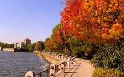 Tópart ősszel