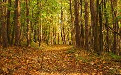 Erdei ösvény