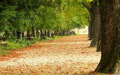 Szolnok Tiszapart - ősz