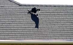 Macska a forró tetőn.