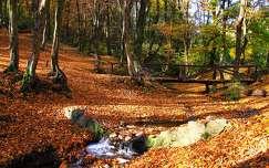 híd ősz patak