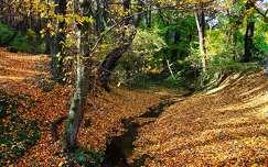 erdő patak ősz