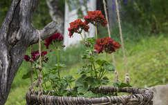 Virág a kosárban