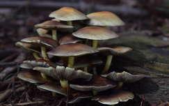 Gombák szinteken