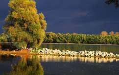 fa ősz tükröződés tó