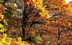 út ősz fa