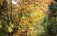 ősz,sárguló fa