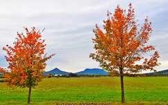 Őszi fák és a tanúhegyek...