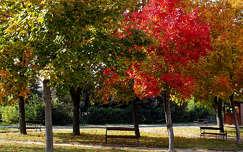 ősz, liget, padok, Balatonalmádi, magyarország