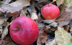 Almák az avarban