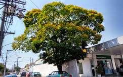 fa virágzó fa