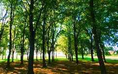 Az erdő.