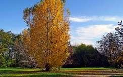 ősz, fa, magyarország
