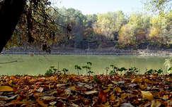 ősz, napsütés, Tisza-part, magyarország